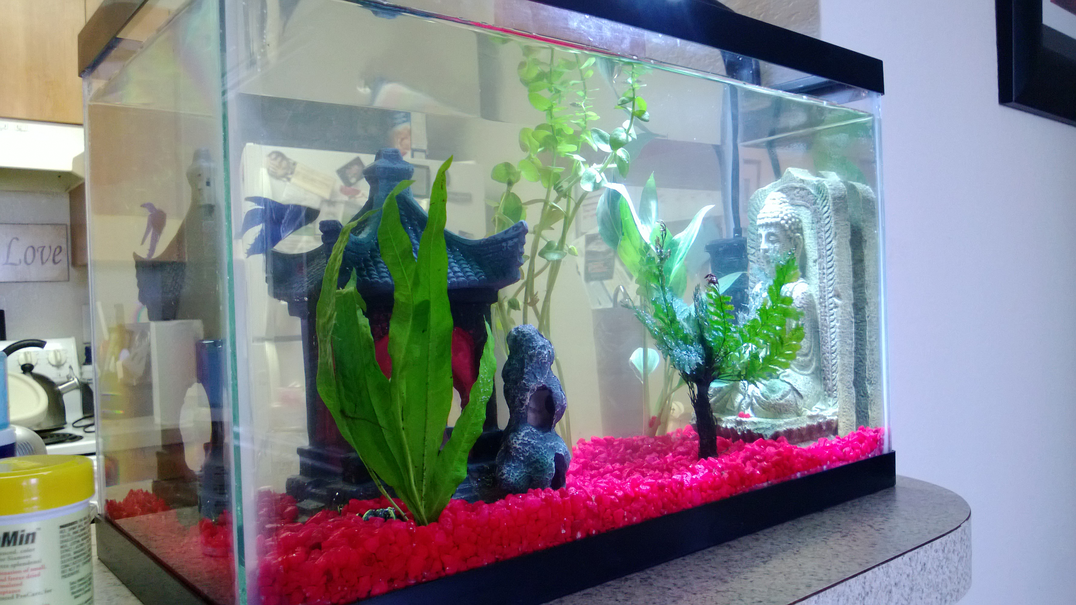 Fish for unfiltered tank - How To Properly Care For A Betta Fish Siamese Fighting Fish